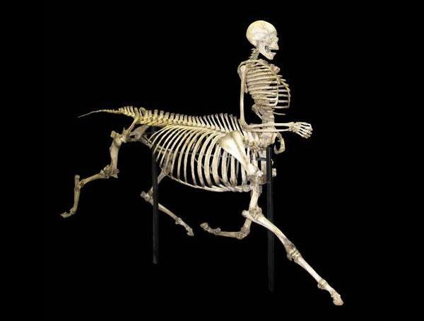 centaure-squelette 600