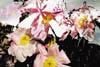 fischli-weiss-fleurs-100.jpg